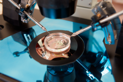 Scientists identify chromosomal fate of embryos at earliest stage of human development