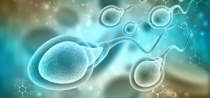 Stopping sperm in its tracks: latest progress in the hunt for a male contraceptive